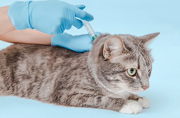 Microchipping cats to be compulsory under the law in the UK