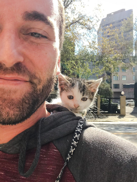 Millie the princess - a very cute kitten on her owner's shoulders