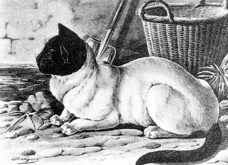 Moor-head cat