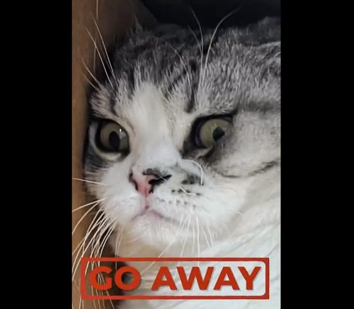 Taylor Swift's cat Meredith hates cameras