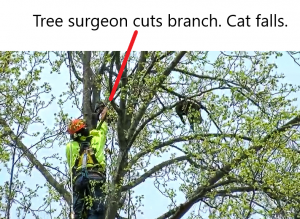 Tree surgeon cuts branch forcing cat stuck in tree to fall to the ground