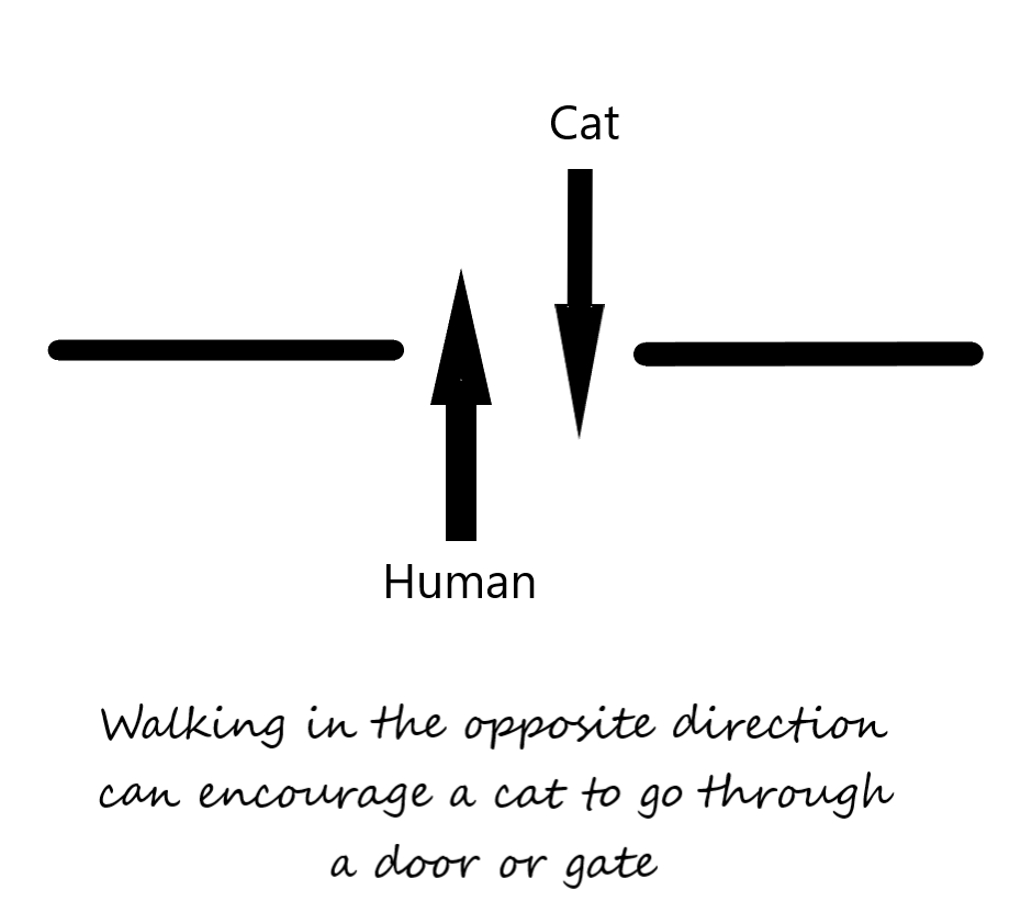 Walking in the opposite direction can encourage a cat to go through an open door or gate
