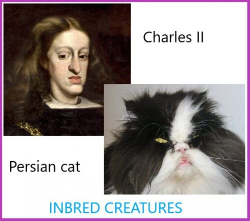 Inbreeding makes an animal or the human-animal less capable