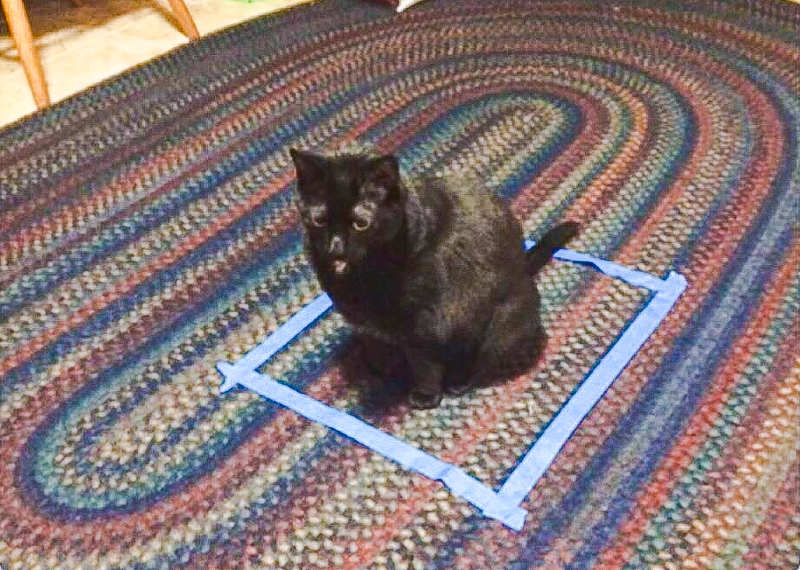 Cat fooled into believing they are sitting inside a box