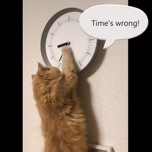 Cat likes to adjust time on clock but it is not deliberate!