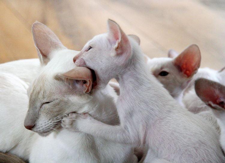 Cat love bite