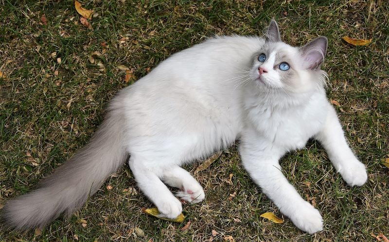 Domestic cats may feel vulnerable because of the enormous size difference