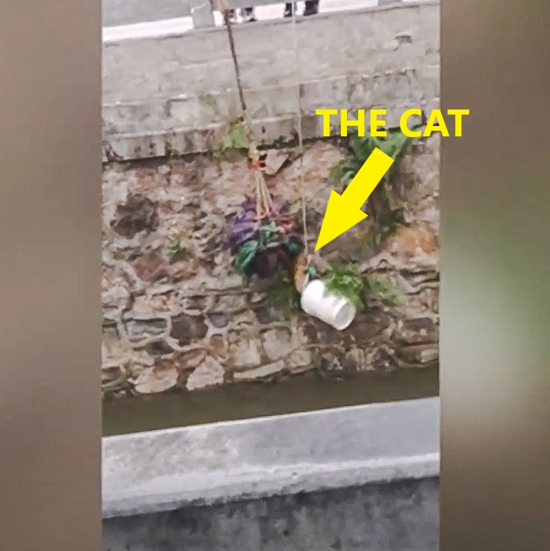 Ginger kitten rescued from urban river in China by pedestrians