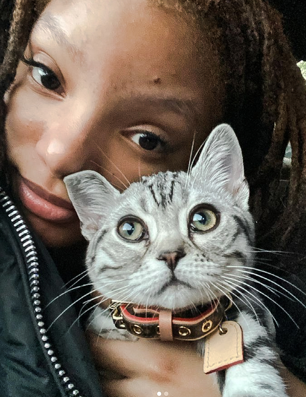 Halle Bailey with her new grey tabby cat wearing an enormous collar