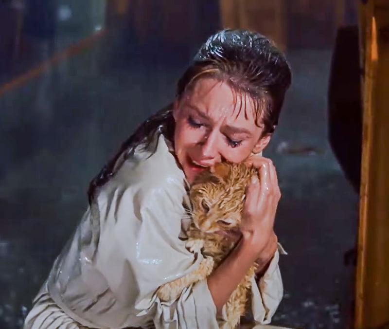 Orangey as 'Cat' in Breakfast at Tiffany's with Audrey Hepburn