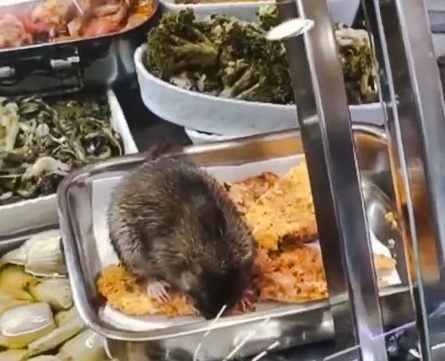 Rat munches on deli produce at Rome supermarket without interference