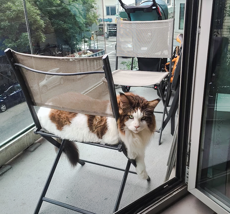 Samson with stroller in background on his balcony in NYC