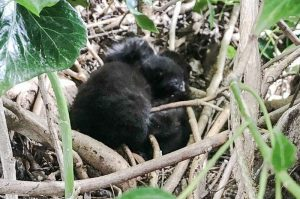 Stray cat makes a den for her kittens in a bird's nest