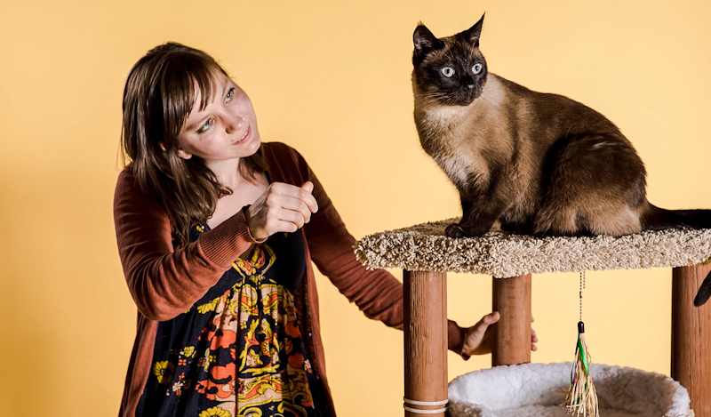 Testing domestic cat social cognition