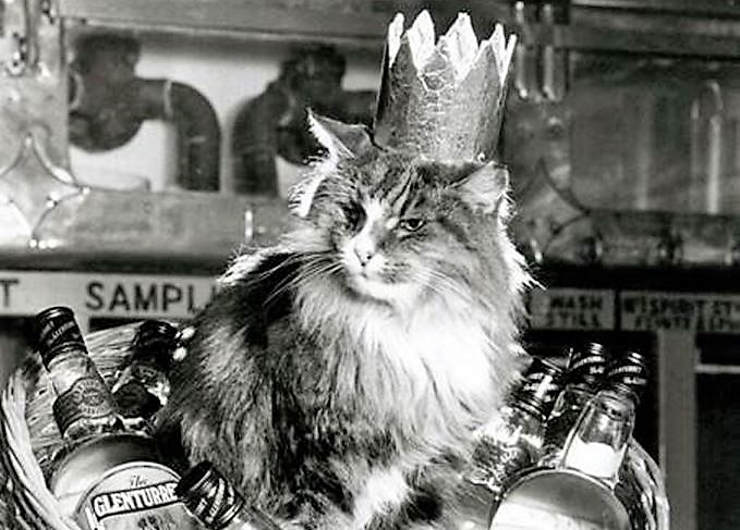 Towser the queen of mousers