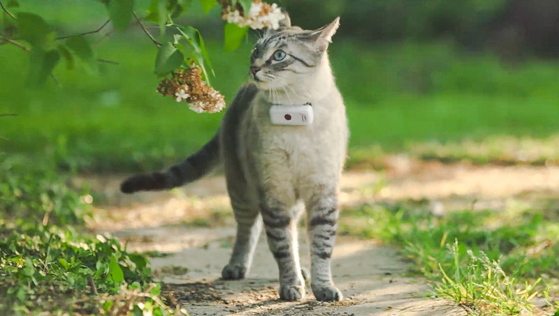 Weenect Cats 2 GPS tracker device worn by a cat
