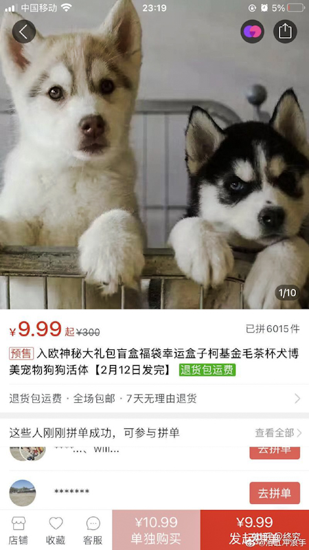 Pet blind boxes advert. Advertising pets to be delivered in boxes by courier system under the pet blind box e-commerce scheme in China which is dramatically inhumane