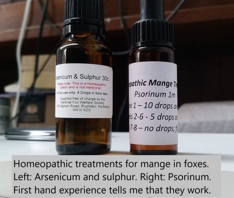 Homeopathic mange cure for foxes but will it work for cats?