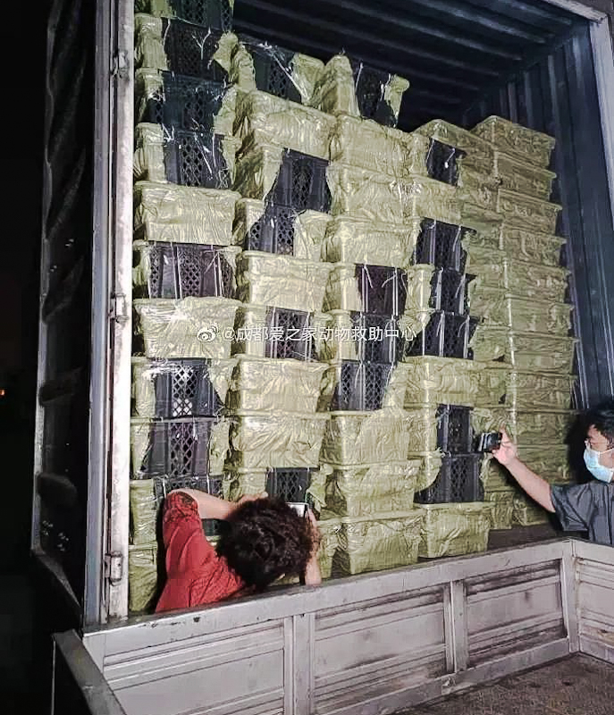 China: volunteers from a rescue organisation photograph pets in pet blind boxes on a lorry before I hope that they save them
