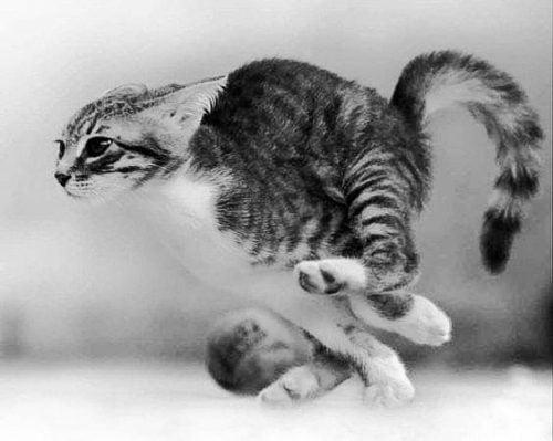 Cat crazies