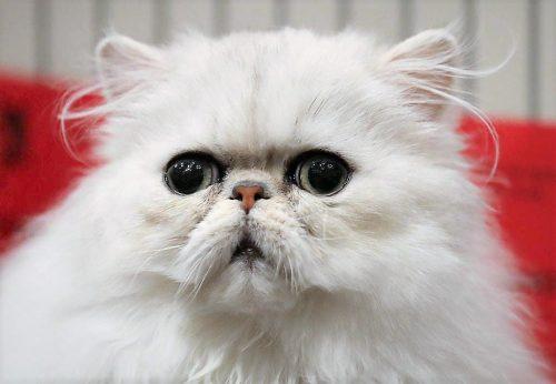 Cat food recall