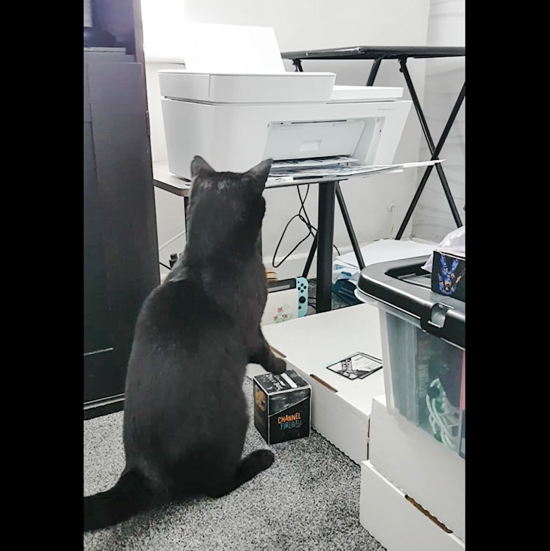 Cat responds defensively to the sounds and movements emanating from a computer printer