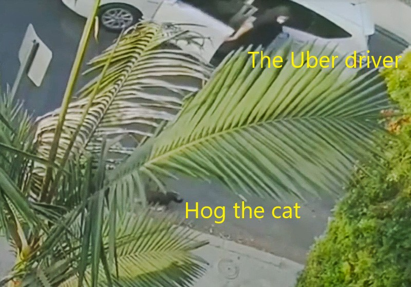 Cat theft by Uber Eats driver in LA, Calif