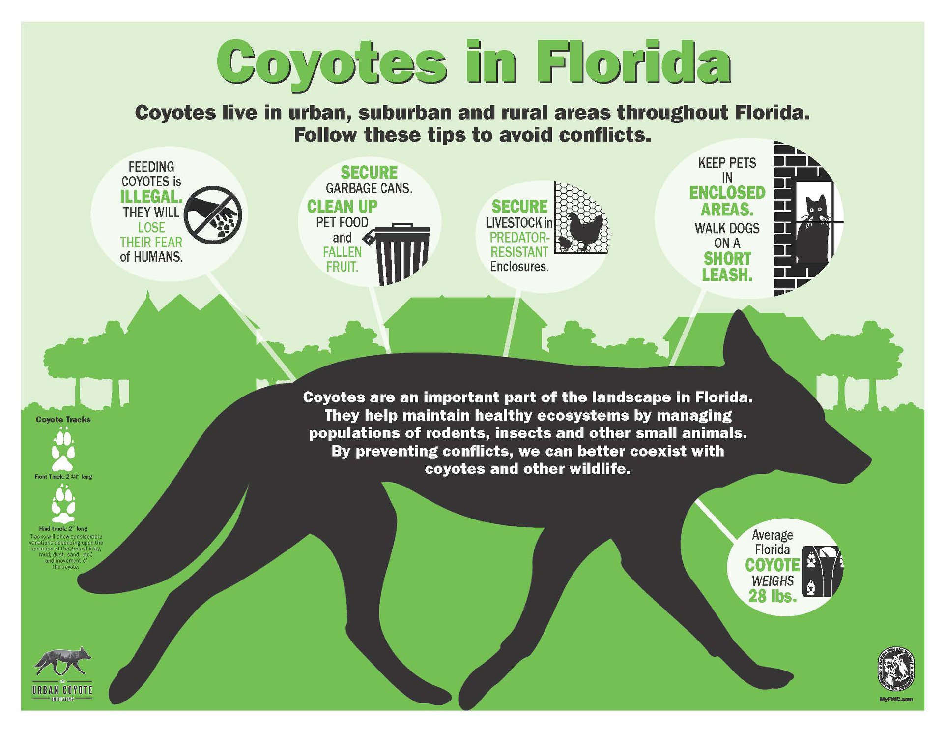 Coyotes in Florida