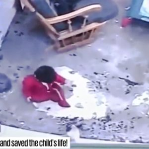 Family cat springs into action to stop child falling down long staircase which would have cause possible serious injury and worse
