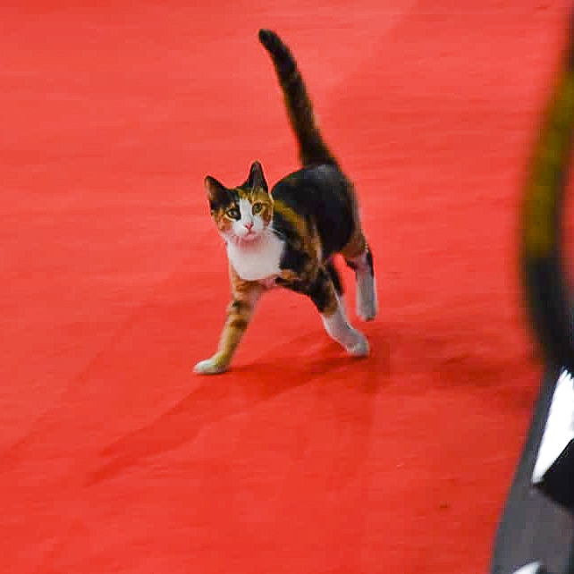 Festival Cat poisoned by the authorities where she lived near Cairo's Opera House