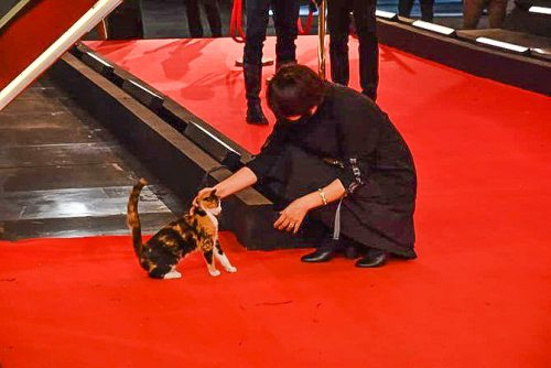'Festival Cat' being petted at the Film Festival