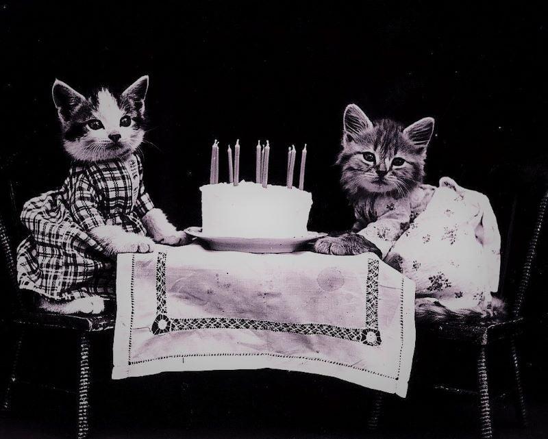 How do I celebrate my cat's birthday?