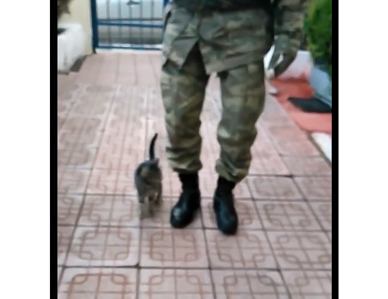 Kitten raised on a military base learned to march