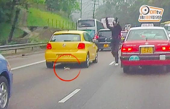 Kitten saved from road by heroic motorcyclist