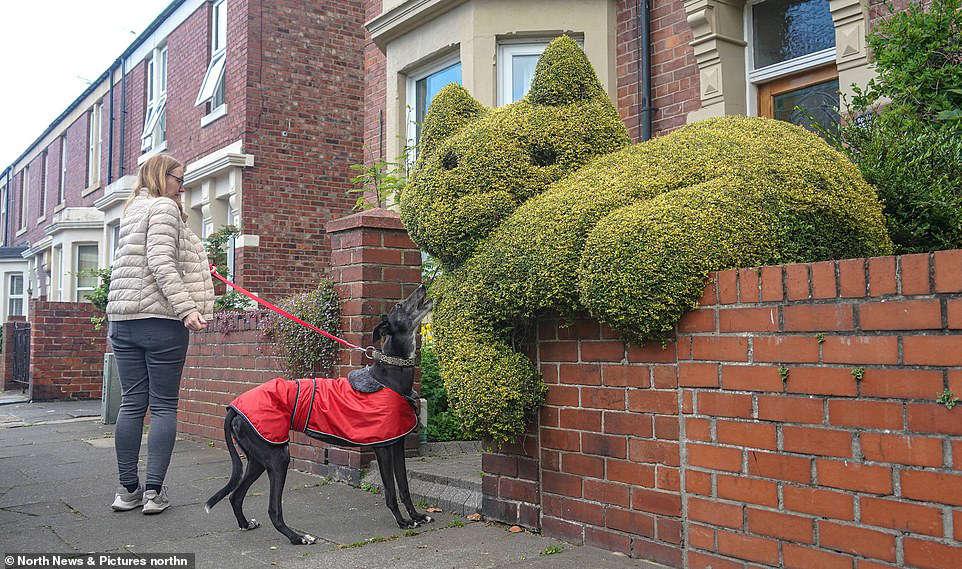 Real cat topiary
