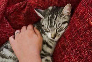 Sushi died of pancytopenia after eating Pets at Home AVA dry cat food