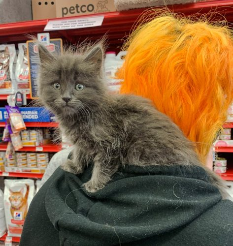 Sweet grey cat on shoulders on woman with dyed ginger hair in a store
