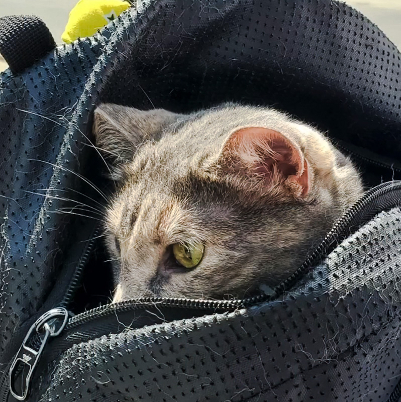 The rescued cat who was rescued with his owner