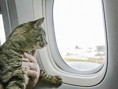 Cat on a plane out of carrier