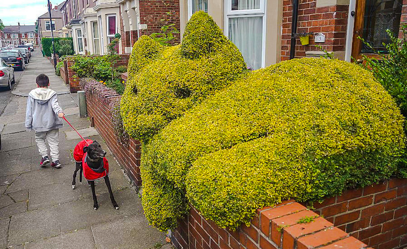 The real topiary cat in South Shields