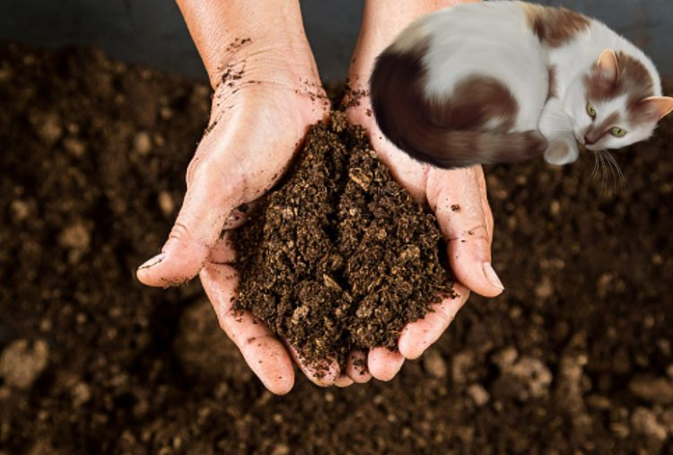 Can cat poop be used in compost?