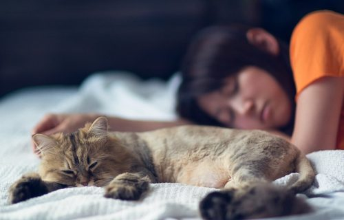 Cat sleeps on bed where they can get Covid