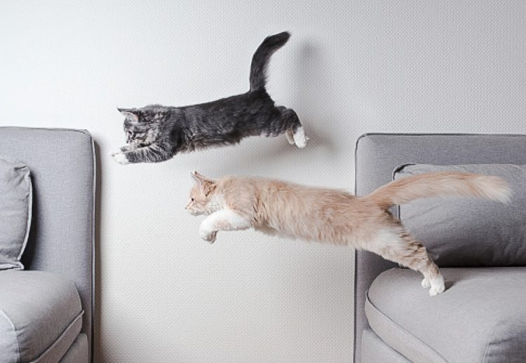 Cats have different energy levels