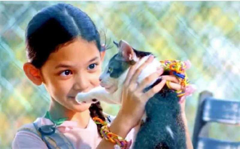 Chomel a film starring a tabby-and-white cat about family life