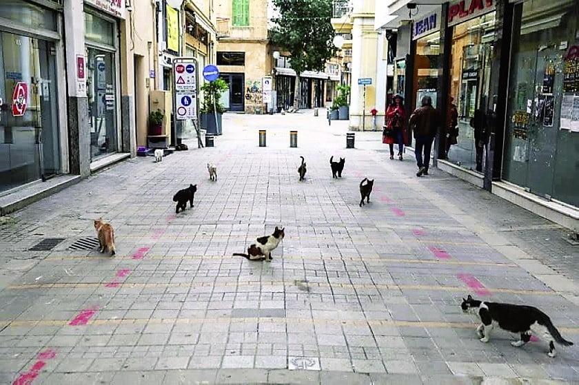 Community cats of Cyprus