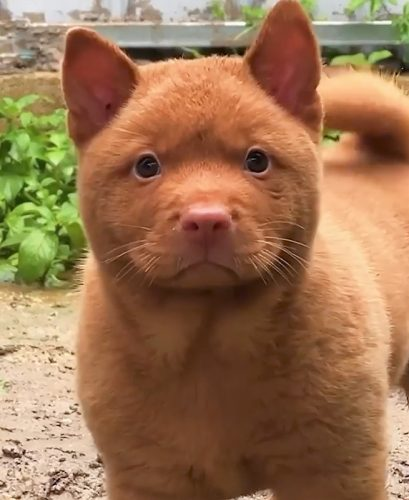 Does this dog really look like a cat?