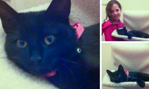 Dundee mum was concerned that she was losing her cats to a neighbour who was feeding them