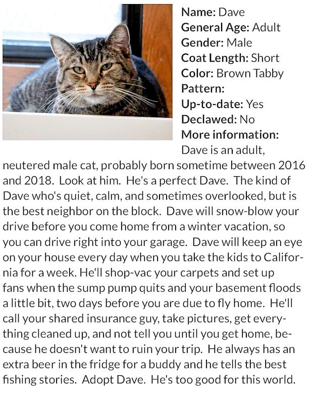 Excellent bio for shelter cat designed to get him adopted