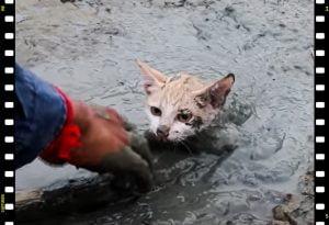 Fake animal rescues of YouTube
