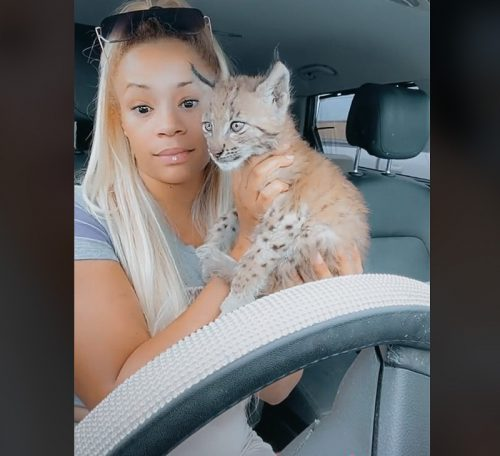 Felicia Wilson and her bobcat kitten - a part of her menagerie of animals